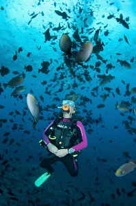 Diver with huge school of Black Durgon by Paul Colley 